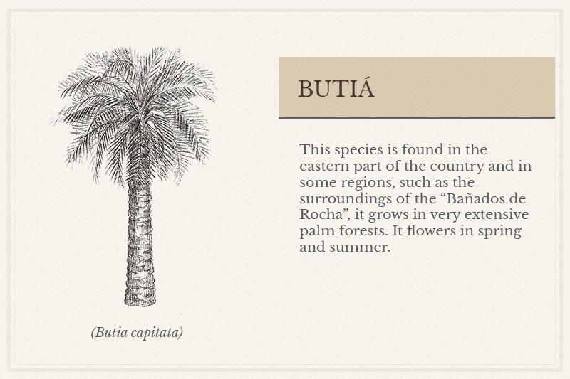 01B_Butia