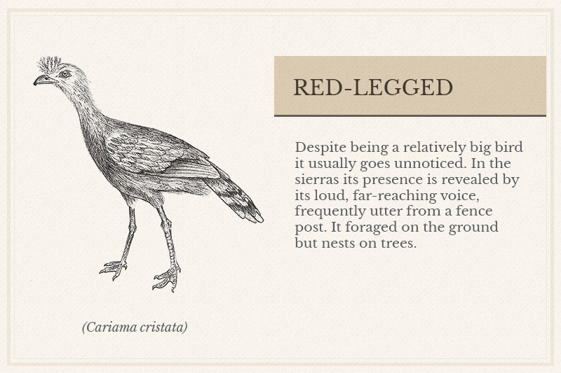 05B_Red-legged