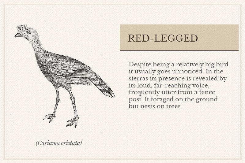 05B_Red-legged