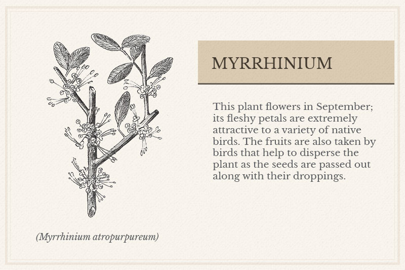 09B_Myrrhinium
