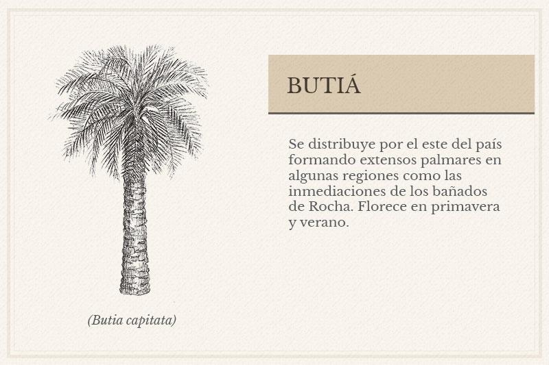 ES-01B_Butia