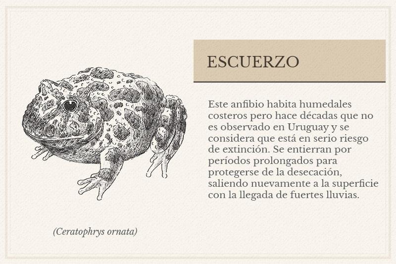 ES-06A_-Escuerzo