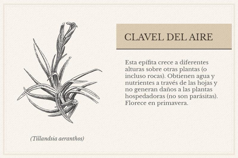 ES-10A_Clavel-del-Aire