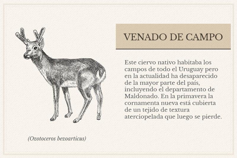 ES-10B_Venado-de-Campo