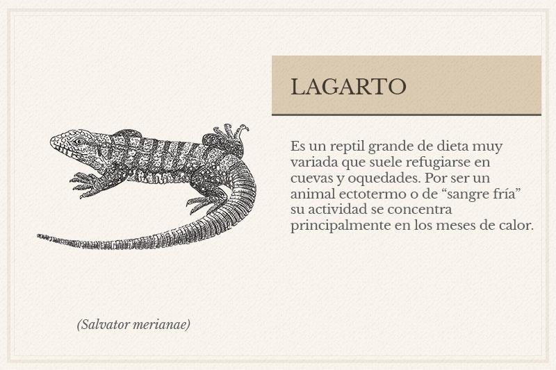 ES-11A_-Lagarto