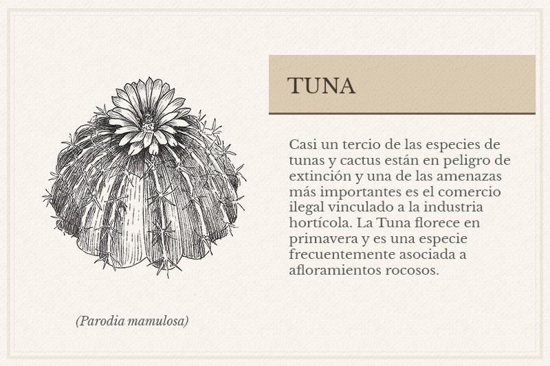 ES-12C_Tuna