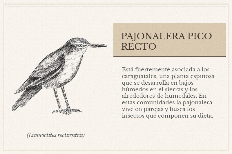 ES-13A_Pajonalera-Pico-Recto