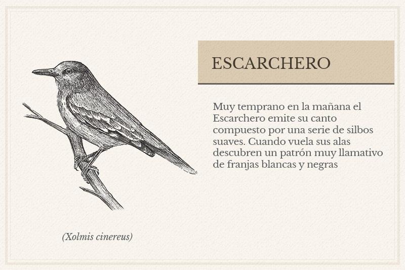 ES-2B_Escarchero