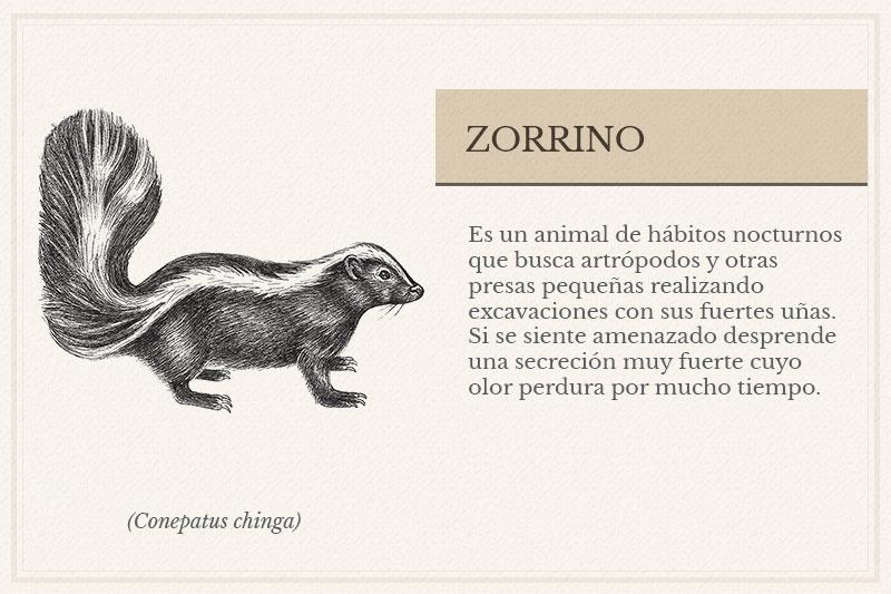 ES-6B_Zorrino