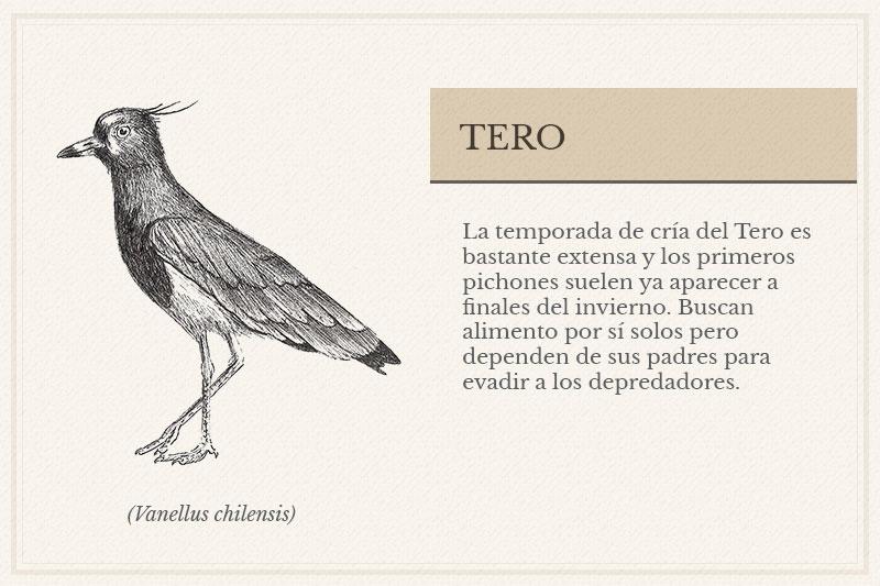 ES-8C_Tero