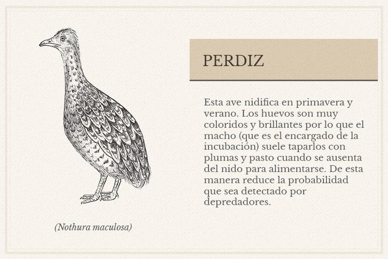 ES-9A_Perdiz
