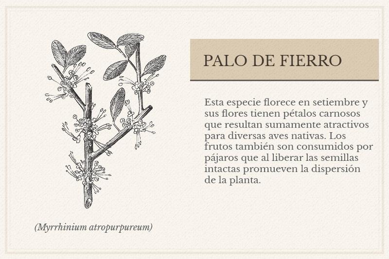 ES-9B_Palo-de-Fierro